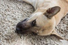 Olhar do cão em mim Fotografia de Stock