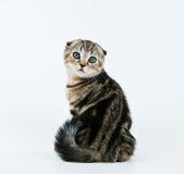 Olhar do gatinho para trás Imagem de Stock Royalty Free
