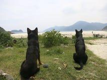 Olhar dos cães na praia Fotos de Stock Royalty Free