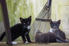 Olhar fixamente dos gatinhos foto de stock