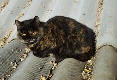 Olhar fixo atento Gato bonito Gato no telhado Gato com olhos amarelos fotografia de stock