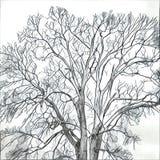 Olhar gráfico da árvore Imagens de Stock Royalty Free
