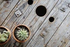 Olhar industrial com cactos e o cilindro de cabo de madeira usado Fotos de Stock Royalty Free
