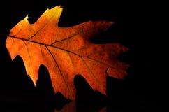 Olhar mais atento na beleza de Autumn Leaf colorido Fotografia de Stock