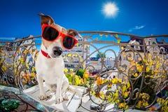Olhar mudo parvo louco do fisheye do cão Imagem de Stock Royalty Free