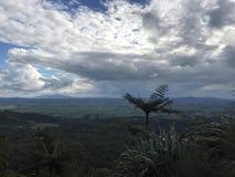 Olhar para fora Nova Zelândia de Kaimai Foto de Stock