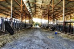 Olhar principal preto e branco da exploração agrícola da vaca Imagens de Stock