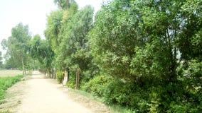 Olhar surpreendente das árvores Fotos de Stock