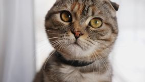 Olhares bonitos na câmera, close-up do gato novo bonito vídeos de arquivo