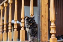 Olhares bonitos novos do gato na distância Foco seletivo imagens de stock