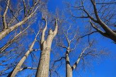 Olhe acima a imagem das árvores no outono e no céu azul Fotografia de Stock Royalty Free