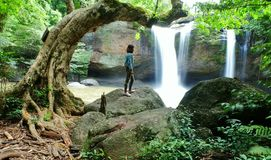 Olhe a cachoeira Imagem de Stock