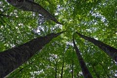 Olhe de debaixo das árvores Fotos de Stock