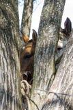 Olhe de dois cavalos imagens de stock royalty free