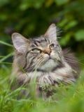 Olhe gatos de lado. Fotografia de Stock Royalty Free