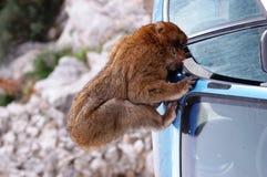 Olhe para fora, relógio, haja um ladrão aproximadamente!!! Fotografia de Stock