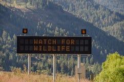 Olhe para o sinal dos animais selvagens fotografia de stock
