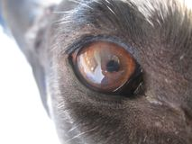 Olho da câmera no olho imagens de stock