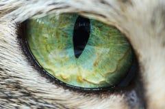Olho de gato Imagens de Stock