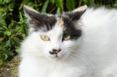 Olho de gato Imagens de Stock Royalty Free