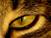 Olho de gato Imagem de Stock Royalty Free
