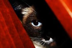 Olho de gato azul. Detalhes Fotografia de Stock Royalty Free