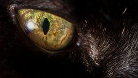 Olho de gato preto Fotos de Stock