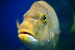 Olho de peixes Fotos de Stock