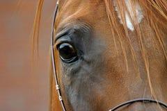 Olho de um cavalo imagem de stock royalty free