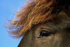 Olho de um cavalo Foto de Stock Royalty Free