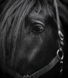 Olho de um cavalo Foto de Stock