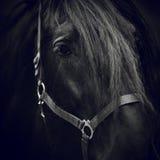 Olho de um cavalo Fotos de Stock Royalty Free