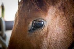 Olho de um cavalo Imagens de Stock Royalty Free