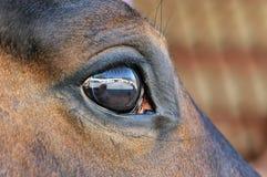 Olho de um fim marrom do cavalo acima Fotos de Stock Royalty Free