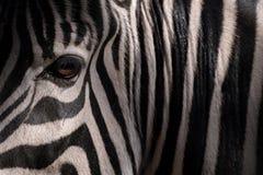 Olho de uma zebra e de listras na obscuridade imagens de stock
