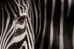 Olho de uma zebra e de listras na obscuridade imagem de stock royalty free