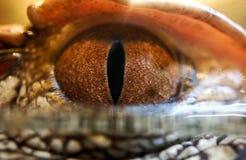 Olho do crocodilo Imagem de Stock