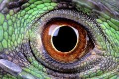 Olho do dragão de água Imagens de Stock Royalty Free