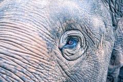 Olho do elefante Imagens de Stock