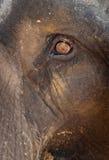 Olho do elefante foto de stock royalty free