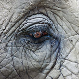 Olho do elefante africano Foto de Stock Royalty Free