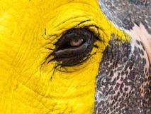 Olho do elefante pintado amarelo imagens de stock royalty free