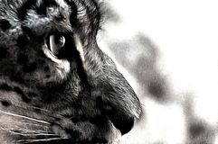 Olho do gato Fotografia de Stock Royalty Free