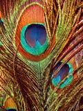 Olho do pavão Imagem de Stock Royalty Free