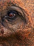 Olho dos elefantes Imagem de Stock Royalty Free