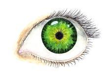 Olho fêmea bonito Ilustração da aguarela Foto de Stock