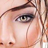 Olho fêmea do close up com composição do olho do marrom escuro imagens de stock royalty free