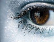 Olho marrom fêmea, coberto com a neve Foto cinzenta Fotos de Stock Royalty Free