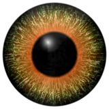 Olho predador do animal 3d ilustração do vetor