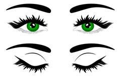 Olho verde fêmea bonito da ilustração do vetor da Web ilustração royalty free